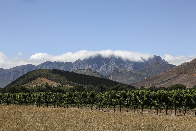 Виноградник в Кейптауне стоковые фотографии rf