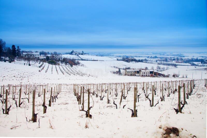 Виноградник в снеге стоковое фото rf