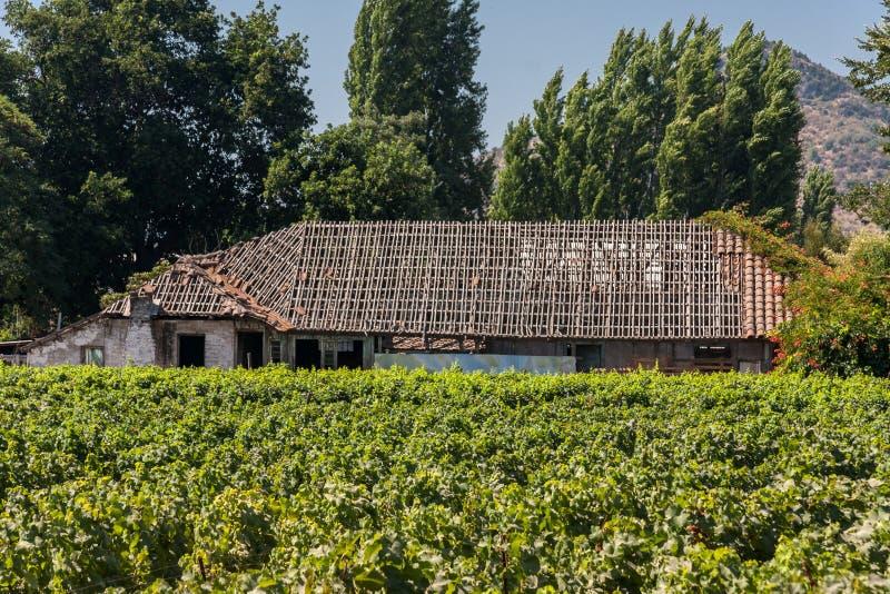 Виноградник в Чили стоковая фотография