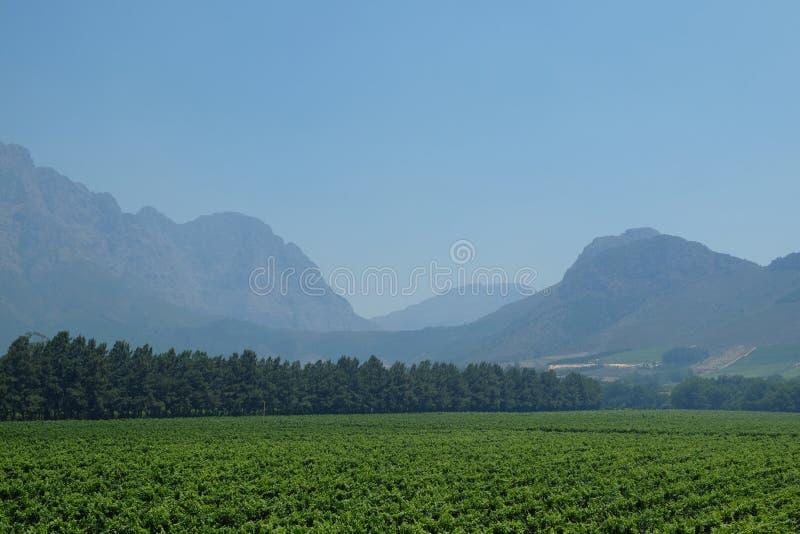 Виноградник Кейптауна стоковое изображение