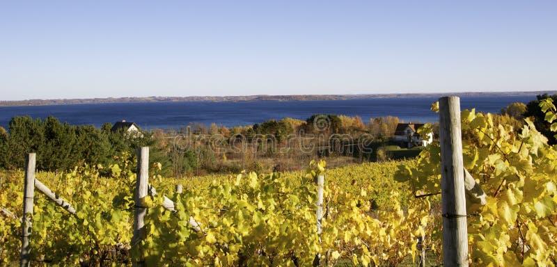 Виноградник озера стоковая фотография