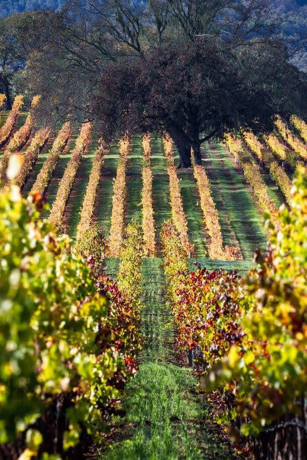виноградник осени цветастый стоковое изображение rf