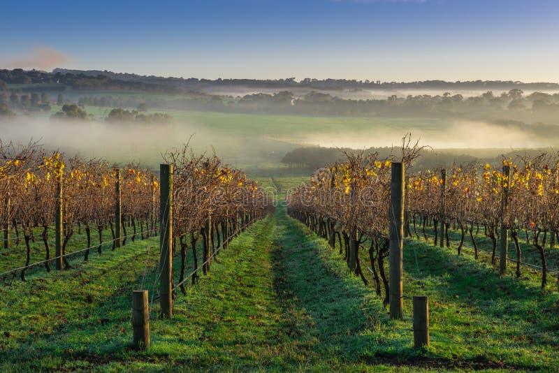 Виноградник осени стоковые фото