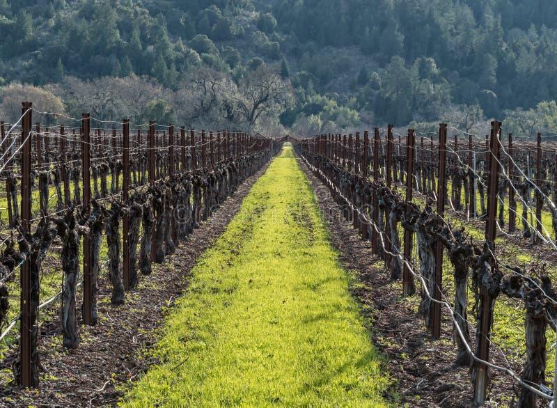 виноградник долины napa стоковые фотографии rf
