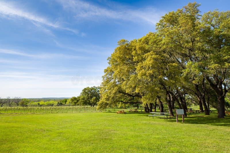 Виноградник страны холма Техаса на солнечный день стоковая фотография rf
