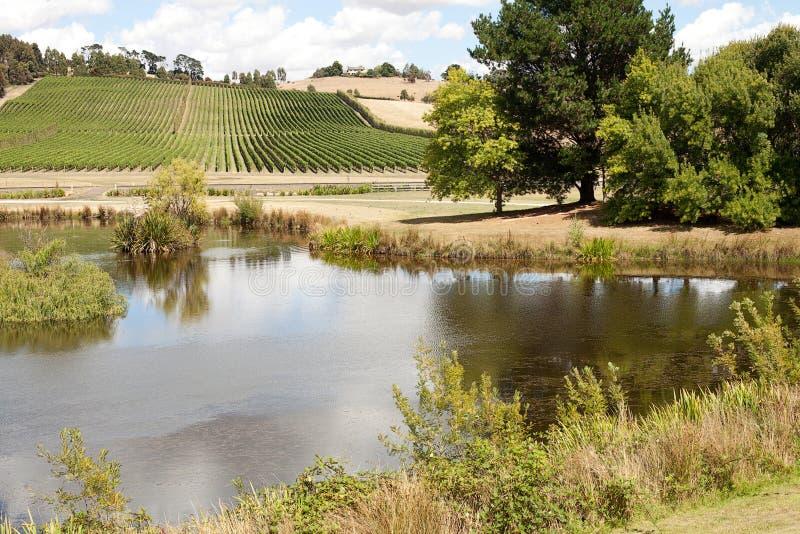 Download Виноградник Тасмания стоковое фото. изображение насчитывающей сценарно - 33733640
