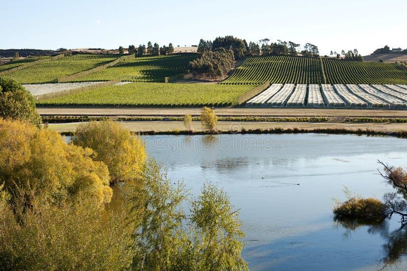 Download Виноградник Тасмания стоковое изображение. изображение насчитывающей садоводство - 33733683