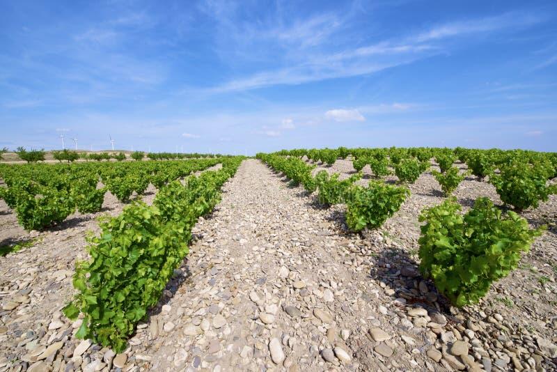 Download Виноградник стоковое изображение. изображение насчитывающей индустрия - 37929259