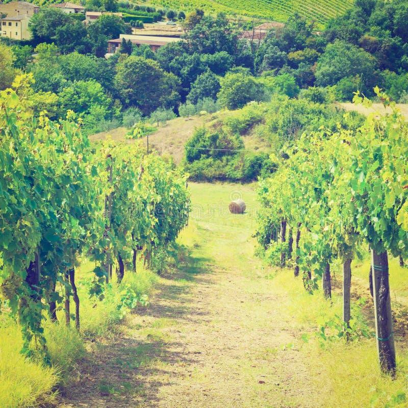 Download Виноградник стоковое фото. изображение насчитывающей chianti - 41654056