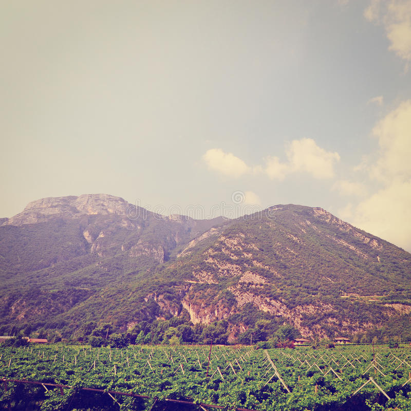 Download Виноградник стоковое изображение. изображение насчитывающей alpines - 41657359