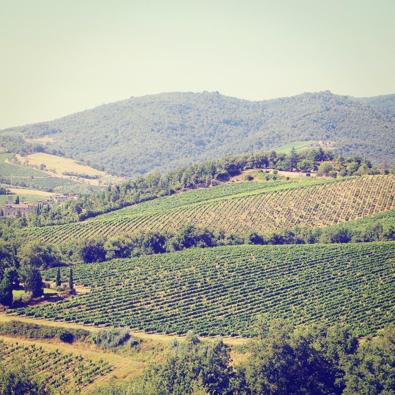 Download Виноградник стоковое фото. изображение насчитывающей картина - 41658674