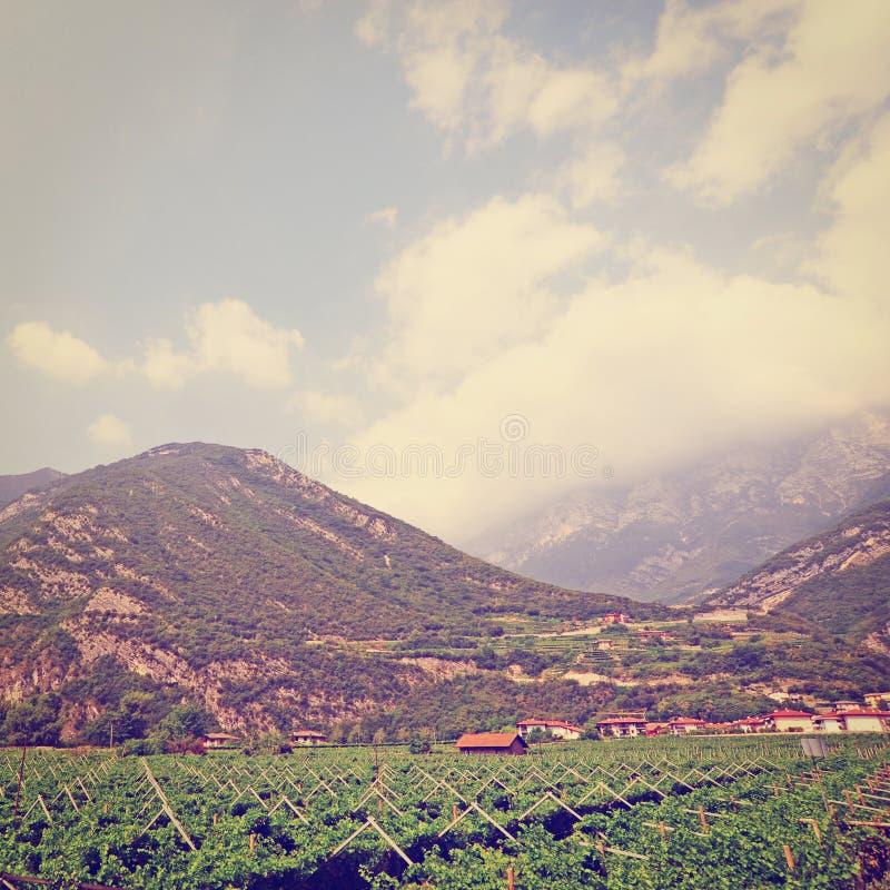 Download Виноградник стоковое фото. изображение насчитывающей земля - 41658676