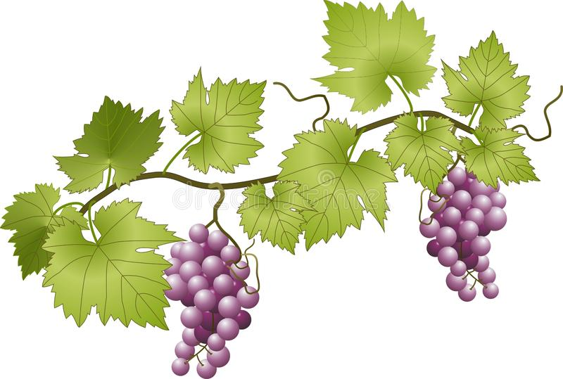 Виноградное вино бесплатная иллюстрация