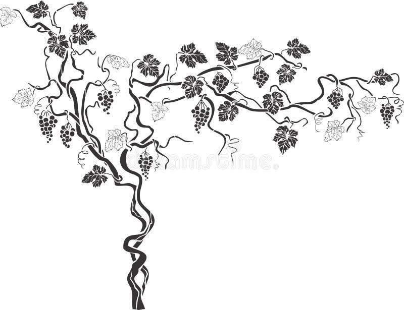 Виноградное вино 1 иллюстрация вектора