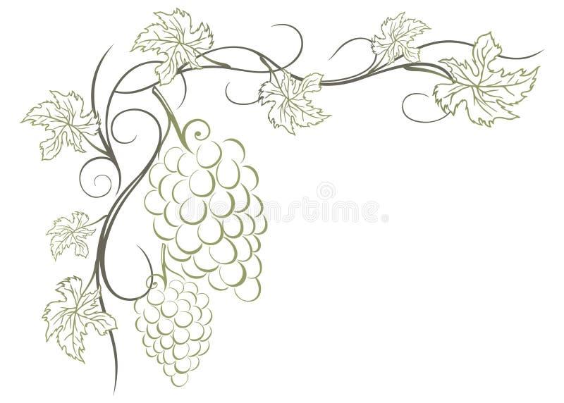 Виноградные лозы иллюстрация штока