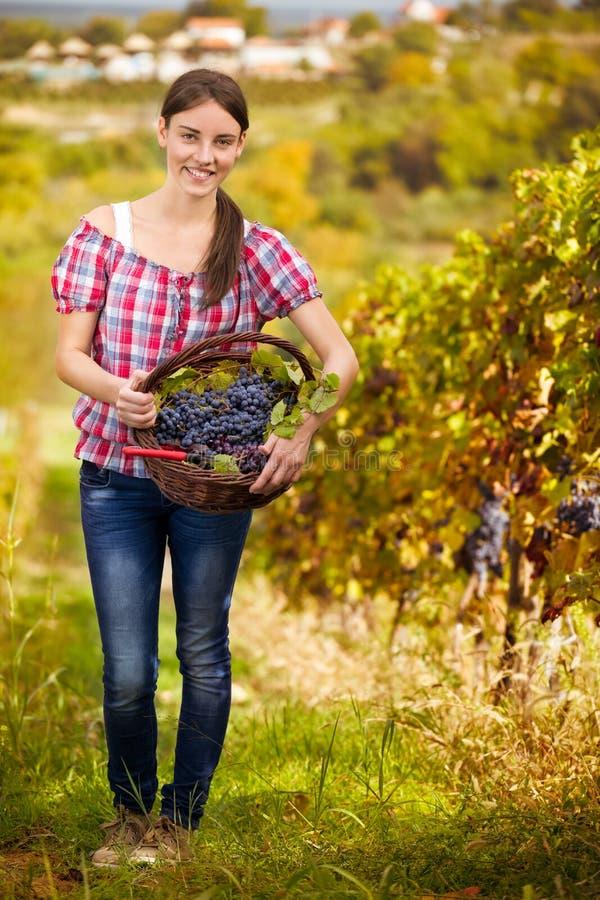 Виноторгоец в винограднике стоковое фото
