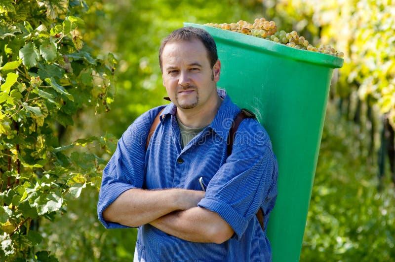 виноторец хлебоуборки стоковое фото rf