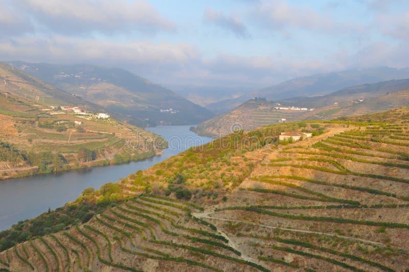 вино виноградников долины Португалии douro гаван стоковое изображение