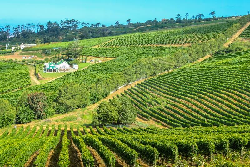 Винодельня Кейптаун фермы стоковые фотографии rf