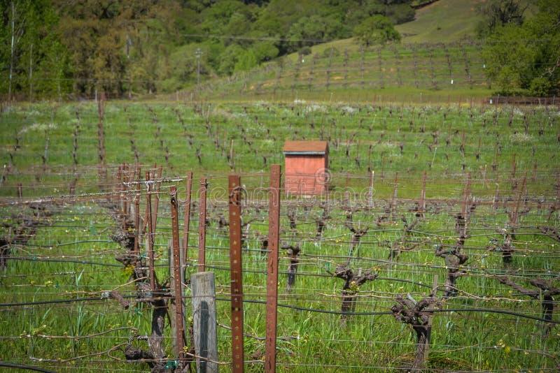 Винодельня семьи Navarro около Philo CA стоковое изображение