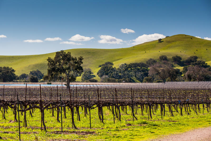 Винодельня Firestone стоковое изображение rf