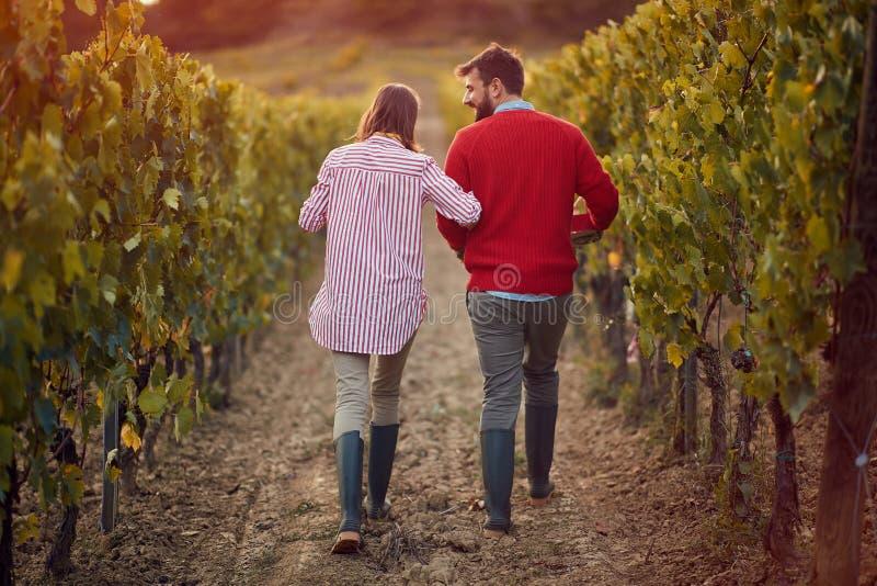 Вино и виноград мужчина и женщина ходят между рядами вин стоковая фотография rf