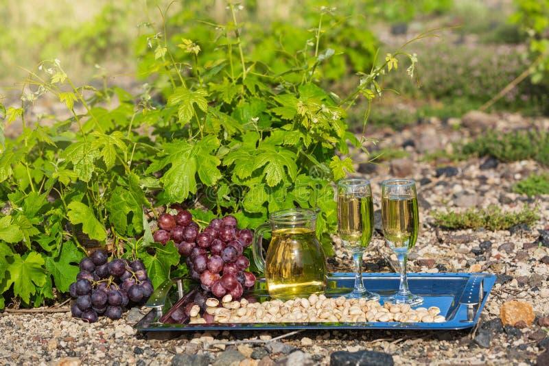 Вино и виноградники стоковая фотография