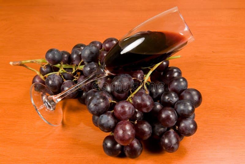 вино лозы стоковое фото