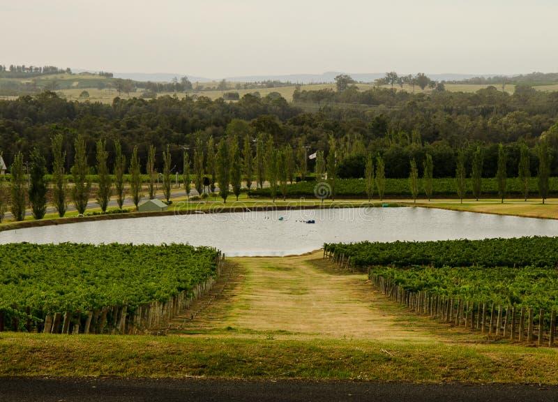вино долины гор страны стоковые фотографии rf