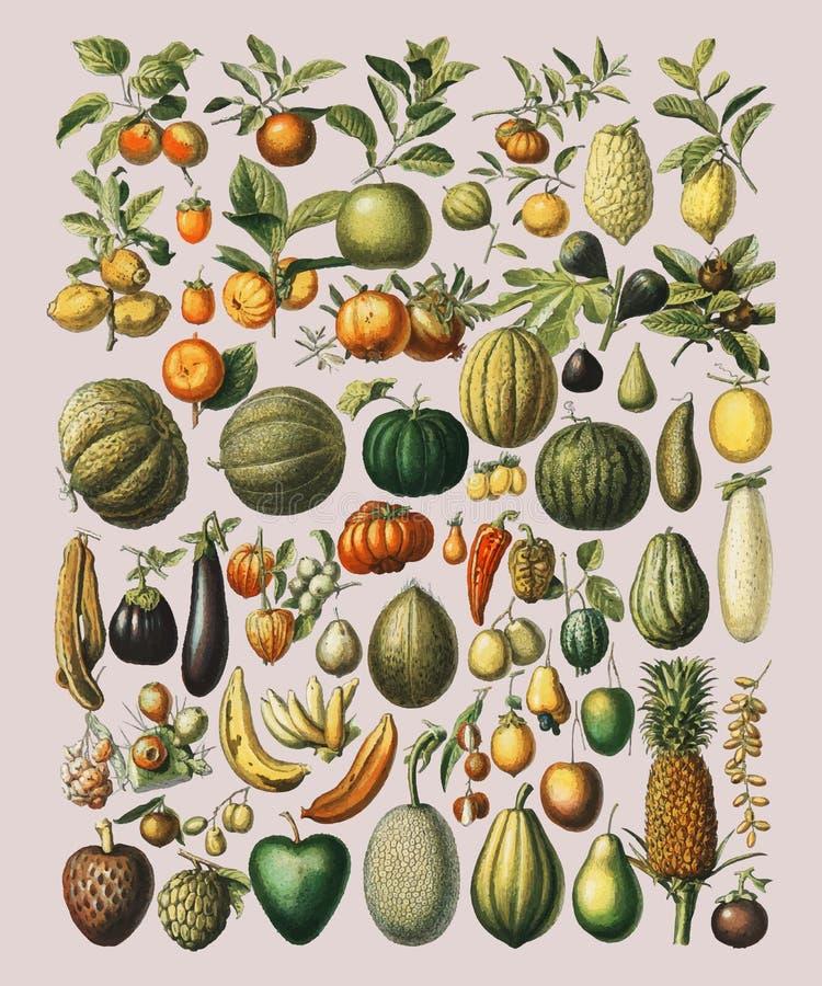 Винтажная иллюстрация большого разнообразия фруктов и овощей иллюстрация штока