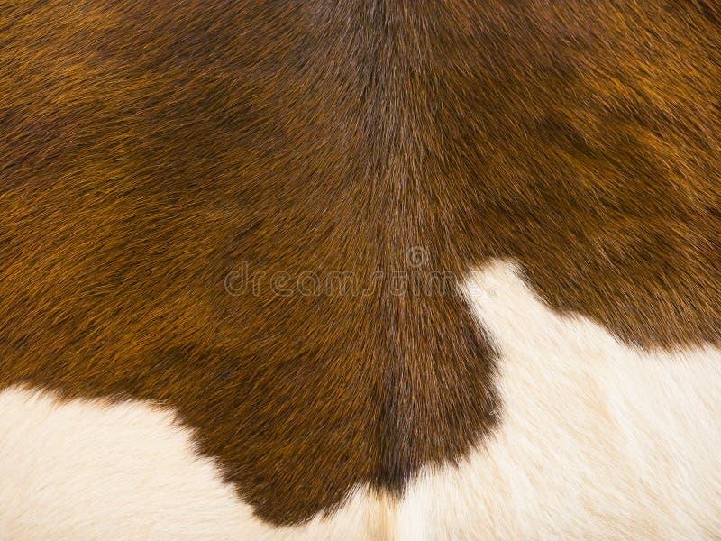 Винтажная кожаная кожа стоковые изображения rf