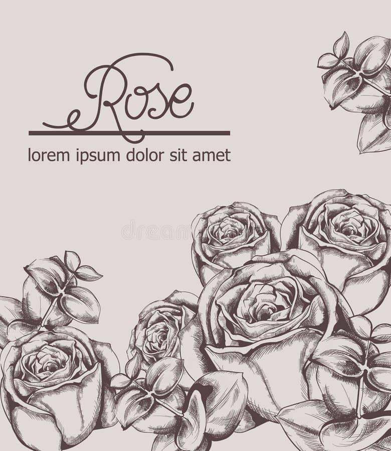 Винтажная линия искусство вектора карты роз Плакаты стиля Boho r иллюстрация штока