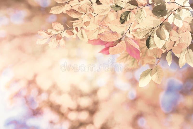 Винтажная предпосылка осени природы стоковое фото rf