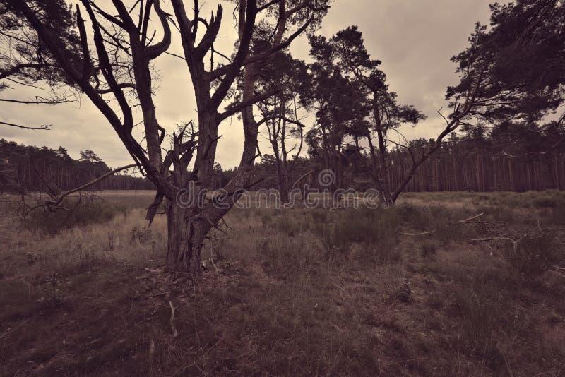 Винтажная съемка sparsely заселенного леса с сериями травы стоковое изображение