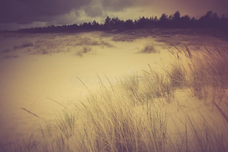 Винтажное фото красивого берега моря с одичалой травой стоковая фотография