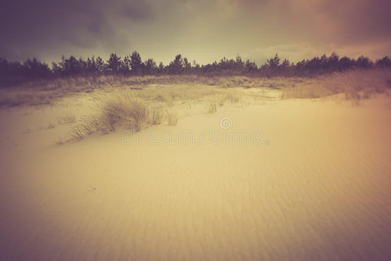 Винтажное фото красивого берега моря с одичалой травой стоковое фото