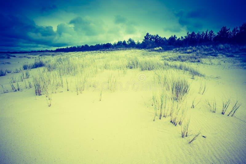 Винтажное фото красивого берега моря с одичалой травой стоковое изображение rf
