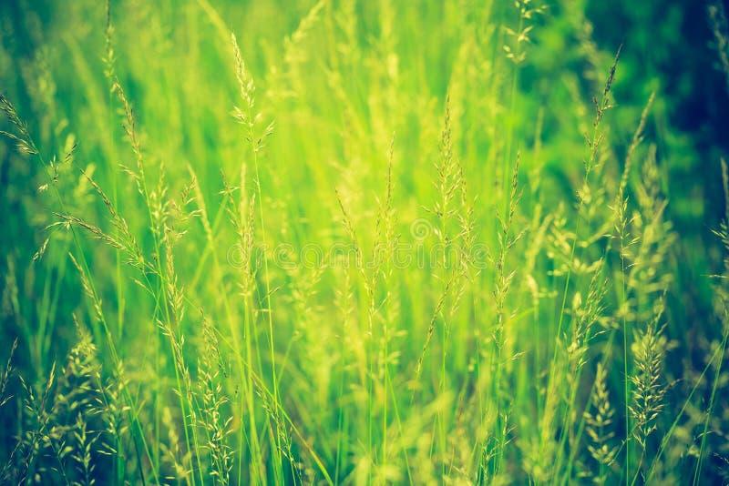 Винтажное фото красивой одичалой травы стоковое фото