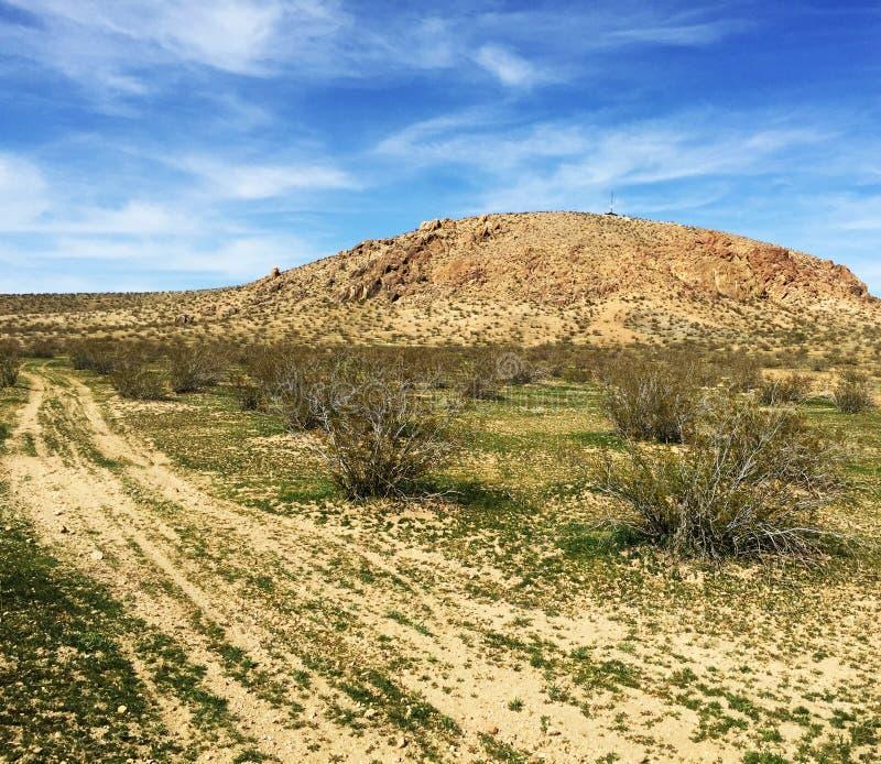 Винтажные автомобили расточительствуя в пустыне стоковое изображение