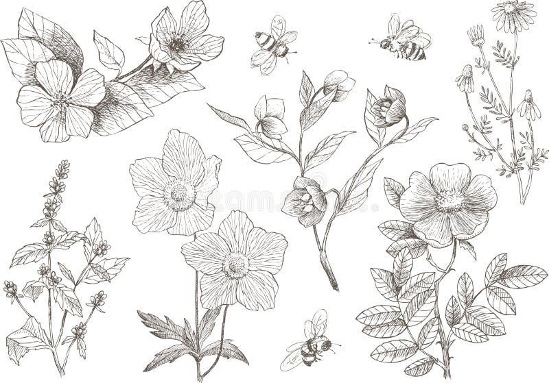Винтажные ботанические установленные цветки цветения иллюстрации бесплатная иллюстрация
