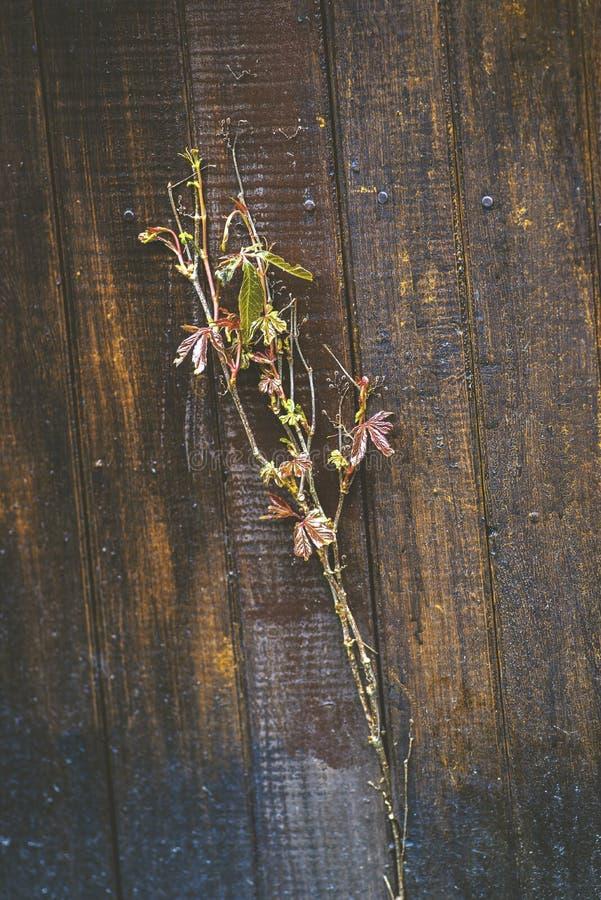 Винтажные и ретро цветки на коричневых досках стоковая фотография rf