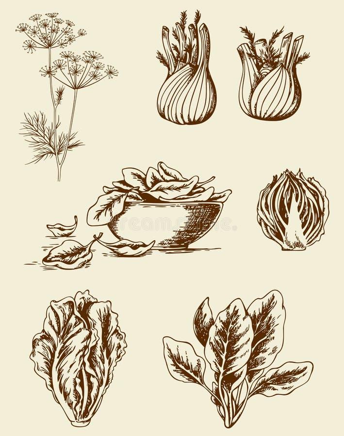 Винтажные овощи иллюстрация штока