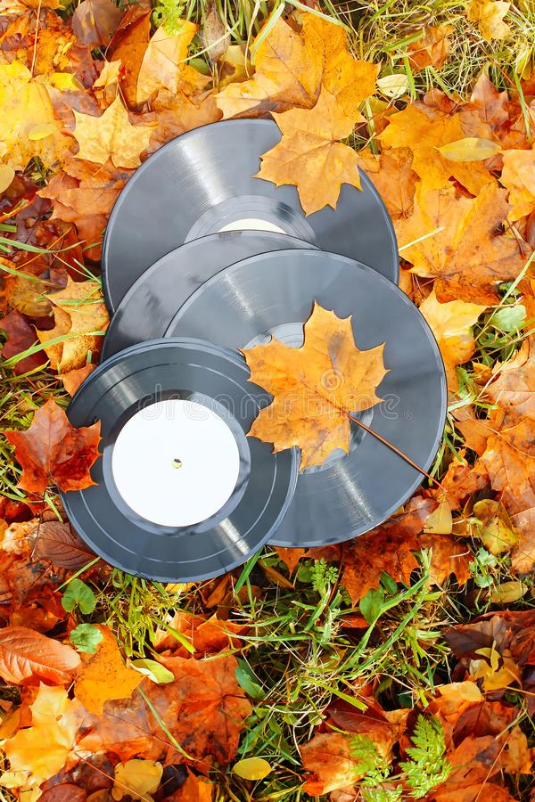 Винтажные показатели винила на листьях осени падения стоковая фотография rf