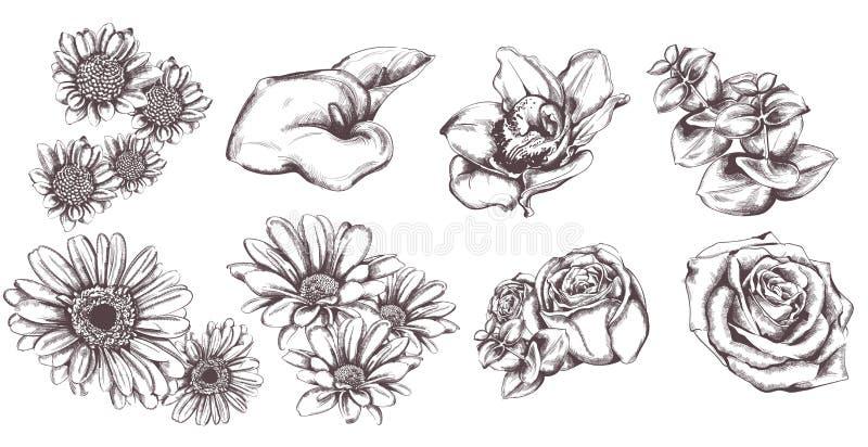 Винтажные цветки установили линию вектор искусства Солнцецвет, розы и иллюстрации лилии бесплатная иллюстрация