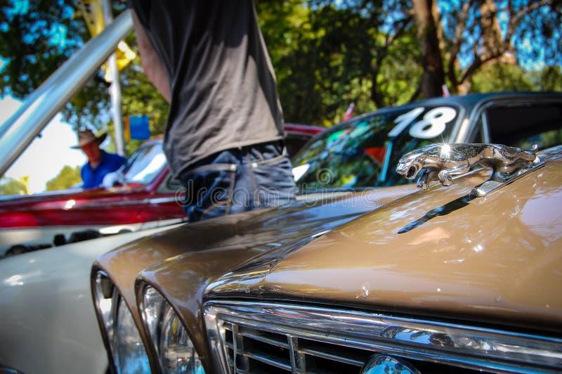 Винтажный автомобиль ягуара, изображение показывает классический логотип тигра ягуара в хромии 3D на клобуке автомобиля в мотор-ш стоковое изображение rf