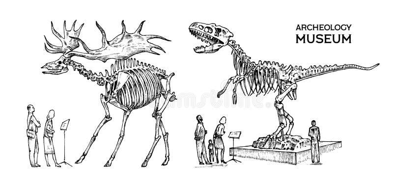 Винтажный археологический музей Посетители смотрят экспонат Исторический скелет потухшего животного динозавра иллюстрация вектора
