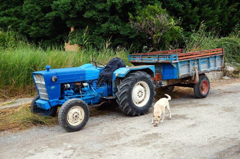Винтажный голубой трактор и трейлер и белая собака стоковые изображения