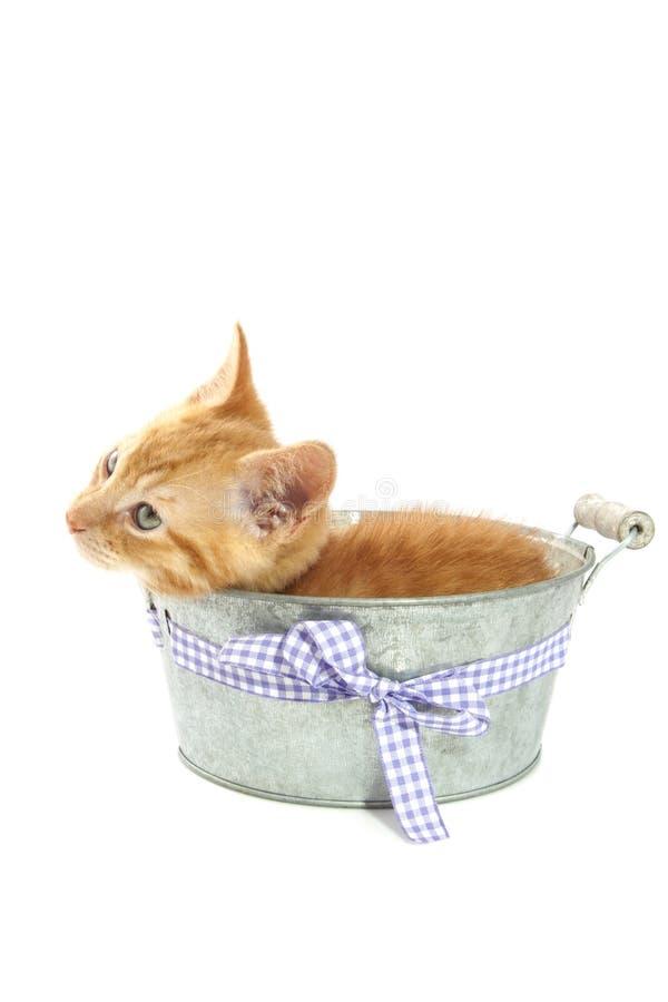 Винтажный котенок стоковые изображения