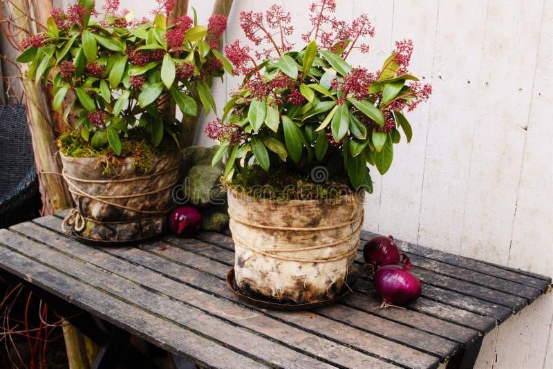 Винтажный цветочный горшок стоковые изображения