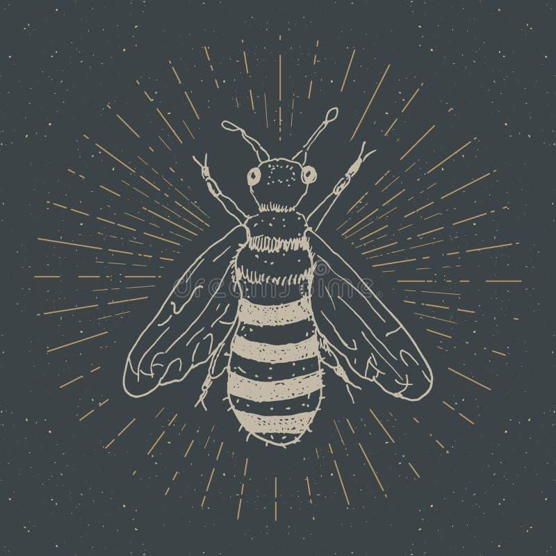 Винтажный ярлык, рука нарисованная пчела, grunge текстурировал значок, ретро шаблон логотипа, иллюстрацию вектора дизайна оформле иллюстрация вектора